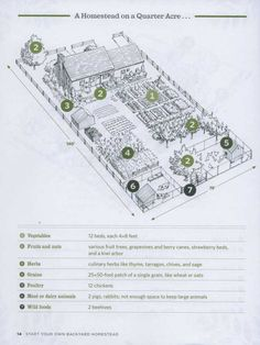Quarter acre homestead layout from the book Backyard Homestead Homestead Layout, Homestead Farm, Homestead Gardens, Farm Gardens, Garden Farm, Veggie Gardens, Garden Beds, Strawberry Beds, Farm Layout
