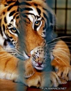 Baby Animals 4/Baby Animals 4 - 25.jpg