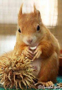 Squirrel and charm Carola Gotyo