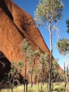 Trees at the base of Uluru (Ayers Rock), Australia