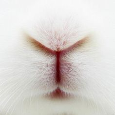 Up close and personal, bunny style!