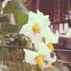 In my garden..