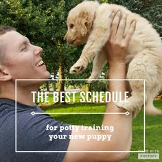 Schedule for potty training your puppy plus tips on how to do it.
