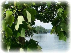 Small island on the lake.
