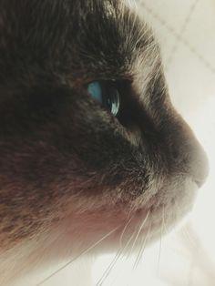 Mi más preciado tesoro. #cute #kitty #cat #baby #pic #fotografía #vsco