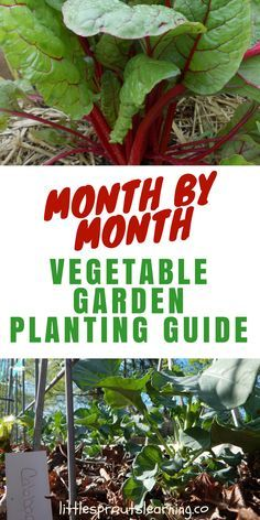 It's hard to keep track of what to plant each month, so here is a vegetable garden planting guide to what you grow when. It will help alot!