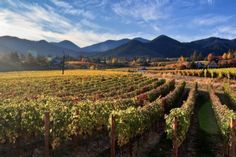 The Best Wineries of Southern Oregon's Applegate River Valley