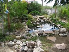 turtle pond - Yahoo Search Results Yahoo Image Search Results