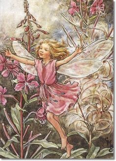 Cicely Mary Barker - Flower Fairies of the Wayside - The Rose-Bay Willow-Herb Fairy Painting