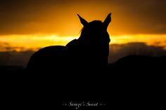 Savage's Sunset by Micha van Neerwijk on 500px