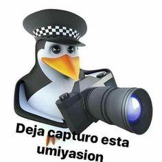 English Memes, Spanish Memes, Best Memes, Dankest Memes, Funny Memes, Pingu Memes, Bad Humor, Meme Template, Cute Memes