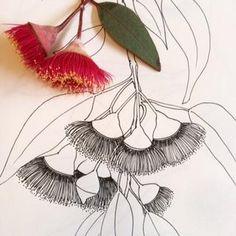 Flower Line Drawings, Flower Sketches, Art Drawings, Botanical Drawings, Botanical Art, Botanical Illustration, Australian Wildflowers, Australian Native Flowers, Australian Art