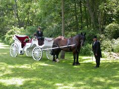 Tips For Planning Your Wedding to Include Your Horse: If you hire a horse and carriage, the driver and operator will look after all of the details of harnessing and transporting the horse and vehicle. On Your Wedding Day, Wedding Tips, Wedding Season, Wedding Planning, Summer Wedding, Horse Transport, Singular, Day Plan, Romantic Weddings