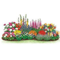 Sun Perennials: Beginner's Endless Bloom Perennial Garden