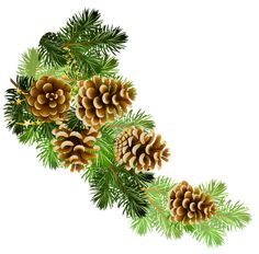 Transparent Pine Branch with Cones PNG Clipart