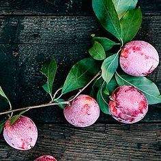 Sweet Treat Pluerry - this plum and cherry hybrid mixes cherry like sweetness with plum size and tartness. Ripens early July through mod-August.
