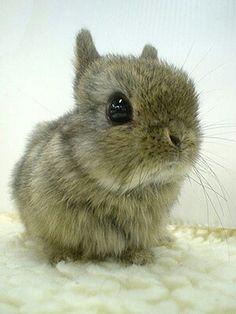 Adorable bunny rabbit :-)