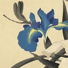 Dragonfly and Irises by 20th century artist. Japanese wood block print