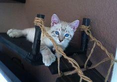 Cat bridge.. indiana jones cat bridge door CatastrophiCreations