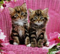 Cute pair of Little Tabby Kittens sitting on a Garden Chair - Aww!