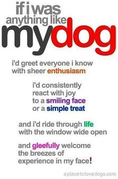 If I was anything like my dog.
