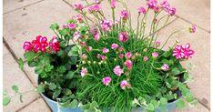 blog lifestylowy o prowadzeniu domu. porady, inspiracje, DIY, gotowanie, pieczenie, ogród, balkon. po prostu INSPIRUJ SIĘ! Garden, Plants, Garten, Lawn And Garden, Gardens, Gardening, Outdoor, Yard, Tuin