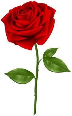 Blue roses love A Platinum Cufflink Set Can Flip A Boring Shirt Into A Vogue Assertion A surprising Red Rose Png, Rose Flower Png, Flower Art, Rose Images, Flower Images, Flower Pictures, Flower Background Images, Flower Backgrounds, Blue Roses Wallpaper