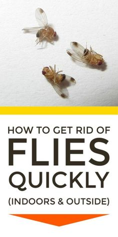 Get rid of flies indoors in the house and garage and outdoors on the patio and in the garden with these pest control home remedies, tips and fly traps using apple cider vinegar Keep Flies Away, Get Rid Of Flies, Fly Control, Best Pest Control, Flys In The House, House Fly Traps, Homemade Fly Traps, Homemade Fly Spray, Apple Cider Vinegar Uses
