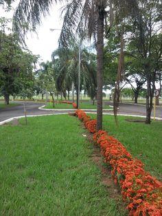4 Canteiro Central - Campus - Faculdade de Odontologia de Araçatuba - UNESP