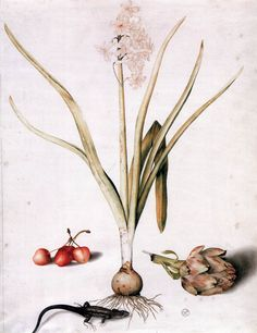 Sketches, Drawings, Etchings, Woodcuts / Hyacinth with Four Cherries, a Lizard, and an Artichoke, Giovanna Garzoni, Tempera and traces of black pencil on vellum, Galleria degli Uffizi, Florence