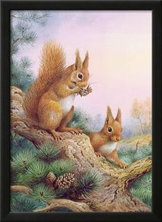 Pair of Red Squirrels on a Scottish Pine Giclee Print by Carl Donner at AllPosters.com