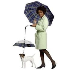If you ever see me walking a cat or a pet pigeon with it's own umbrella like this. Just shoot me, especially if they are matching! Pet Pigeon, Dog Umbrella, Mini Goldendoodle, Geek Gadgets, Dog Safety, All Things Cute, Awesome Things, Baby Puppies, Easy Gifts