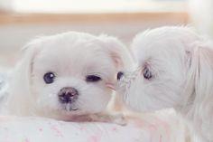 ahhh, so adorable!