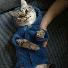 Loki the 'Vampire' Cat Is the Evilest Looking Pet Ever - BlazePress