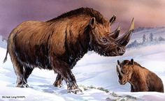 10 Animal Candidates for Genetic Resurrection -Woolly Rhinoceros