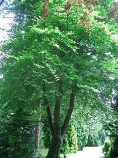 Summer Trees, English, Plants, English Language, Plant, Planets
