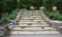 Rustic Stairs with groundcover | Terra Ferma Landscapes