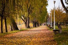 Autumn in the park, Arad Romania, Country Roads, Community, Autumn, Park, World, Places, Fall Season, Fall