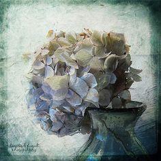 Another Hydrangea by Kerstin Frank art, via Flickr
