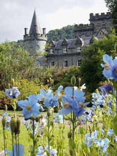 At the gardens of the Inveraray Castle in Scotland.