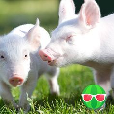 Vegan Calculator - How much have you saved? & A Vegan lifestyle saves animals, the environment and much more. See how much you've saved.