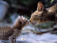 一番かわいいネコの画像貼ったやつが優勝                                                                                                                                                                                 もっと見る