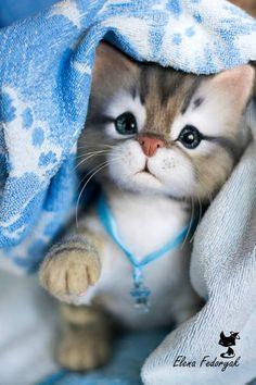 Kitten Prosha - real sized Needle Felted toy By Elena Fedoryak - Bear Pile