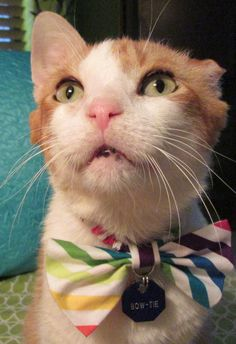 Bow-Tie's Overstock Adoption Event - August 28 to September 2 #GivingChallenge15 #ShowThemTheLove