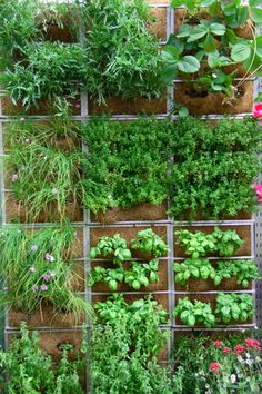 Pinterest Home Gardening | When you don't have a lot of space for a garden, you can still build ...