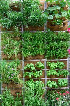 Vertical edible garden