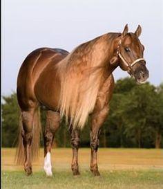 Sorrel Quarter Horse with long mane