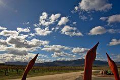 Langi Ghiran Vineyard, a glorious place..good wine too ;)