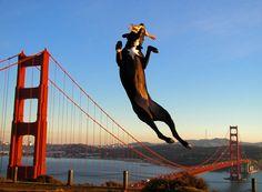 Yahoo, I'm jumping over the golden gate bridge  Yahoo