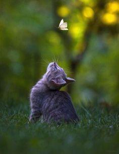 Katze und Schmetterling                                                                                                                                                                                 Mehr